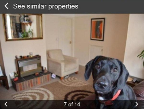 12-terrible-real-estate-agent-photos